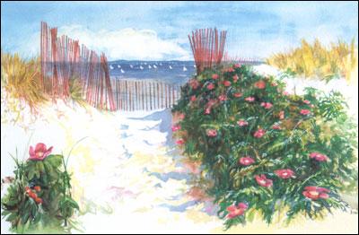 Little Island Beach Falmouth Ma